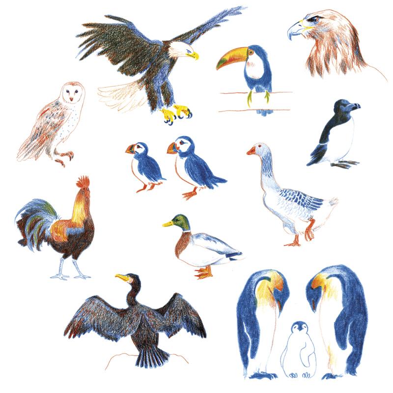 Oiseaux Web Rvb