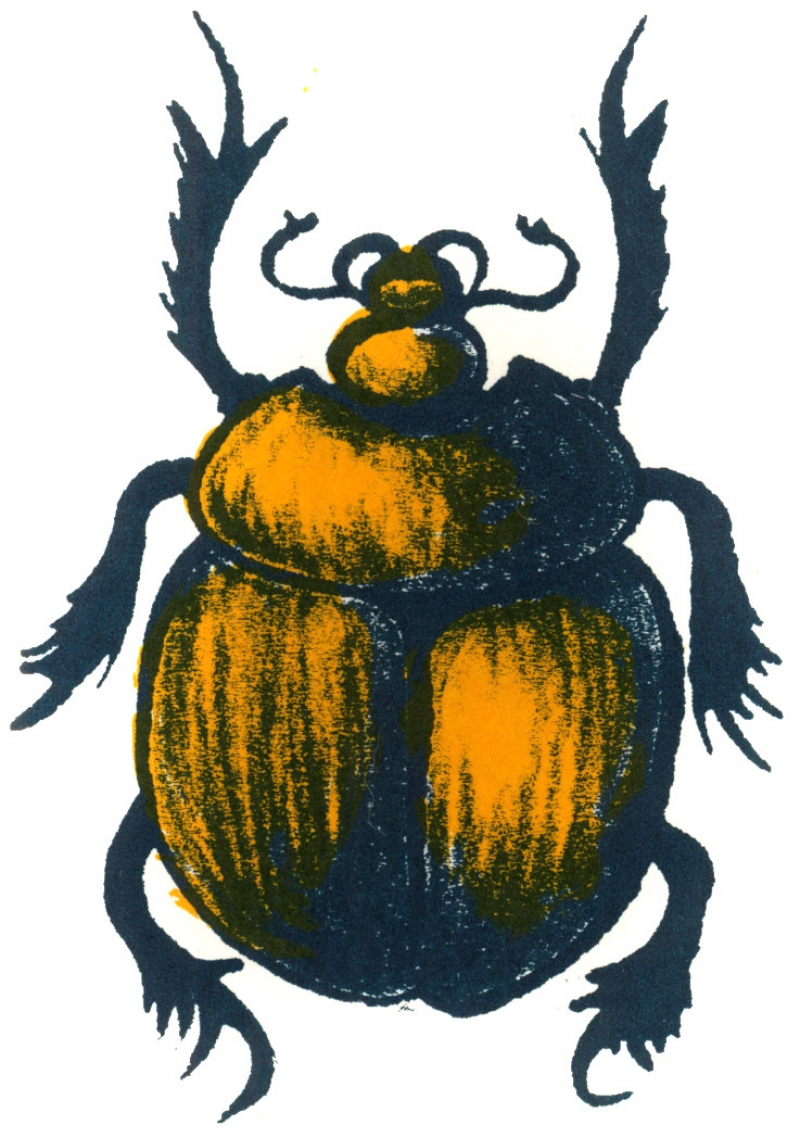 scarapasteq